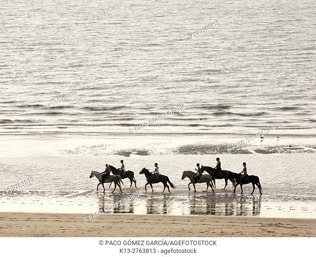 Horses walk at dawn in De Haan. Belgium. North Sea