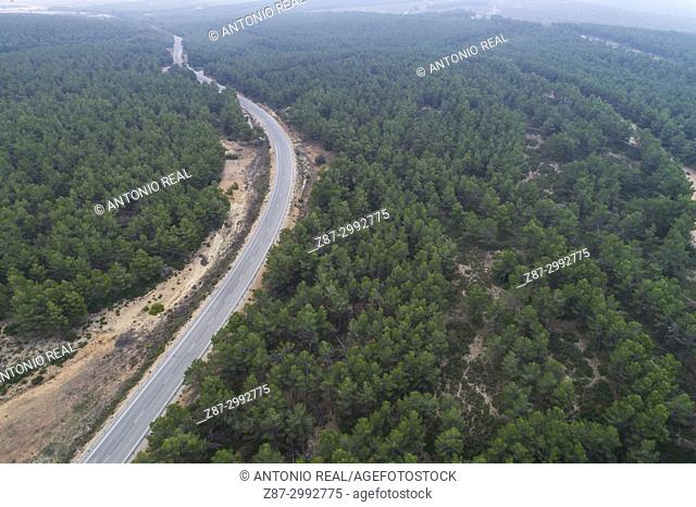 Pine forest and winding road. Almansa. Albacete province. Spain