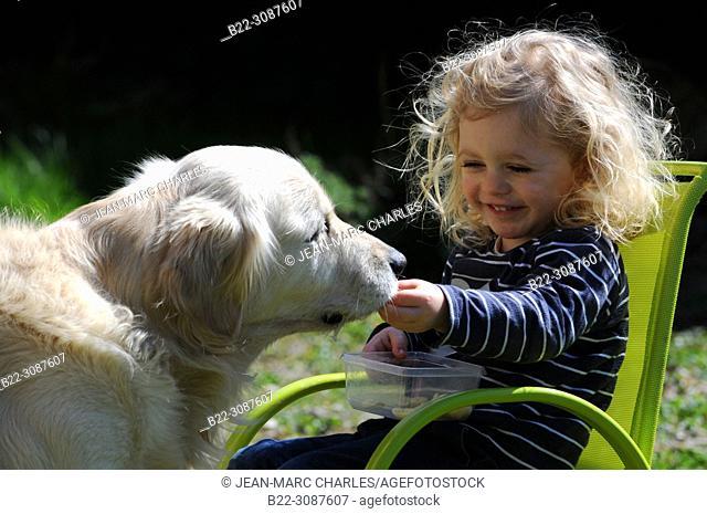3 year-old girl feeding her golden retriever dog