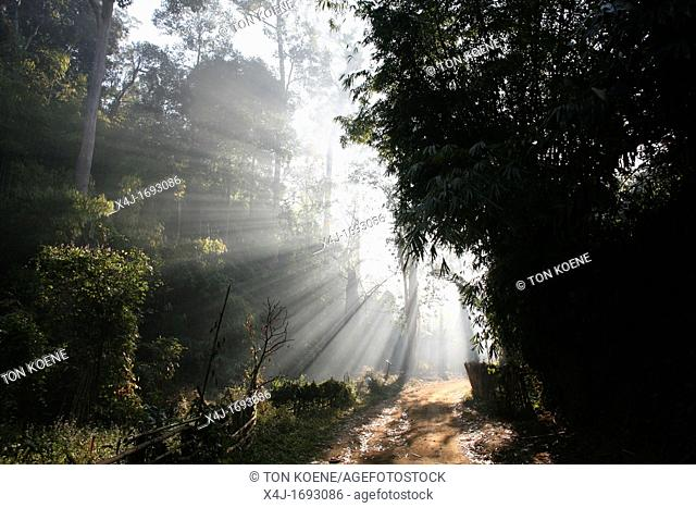 Sunlight streams through the jungle near the Longneck village Approximately 300 Burmese refugees in Thailand are members of the indigenous group known as the...