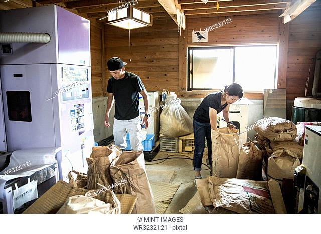 Japanese farmer and woman working indoors, filling brown paper sacks