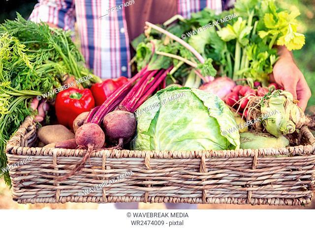 Midsection of gardener holding fresh vegetables in basket at garden