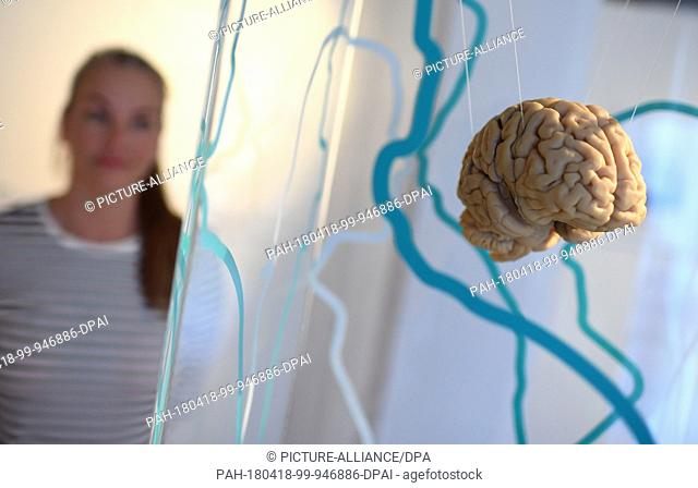 18 April 2018, Germany, Berlin: A young woman takes a look at a model of a brain at the exhibition 'Scheintot' (lit. seemingly dead)