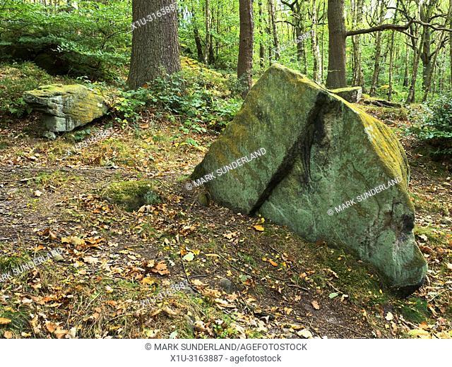 Lichen covered boulder in Shipley Glen in early autumn near Baildon West Yorkshire England