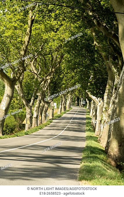 EU, France, Bram. Plane trees lining highway D4 approaching the town of Bram in the south of France