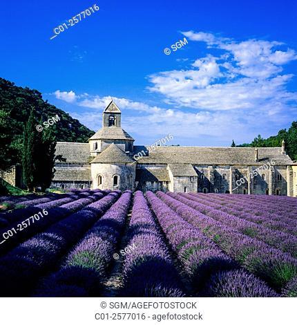 Abbaye de Sénanque monastery, blooming lavender field, Gordes, Vaucluse, Provence, France