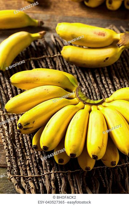 Raw Organic Yellow Baby Bananas in a Bunch