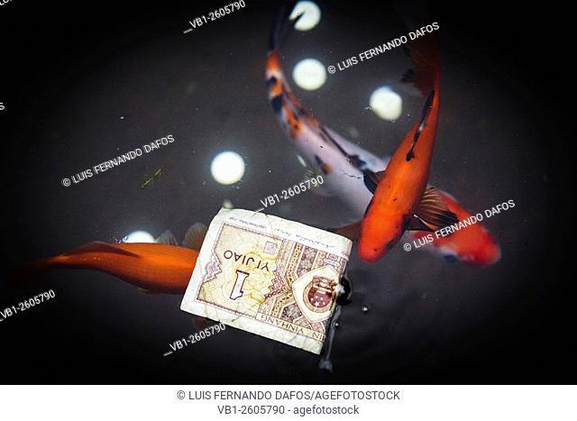Banknote and three red carp at a pond. China