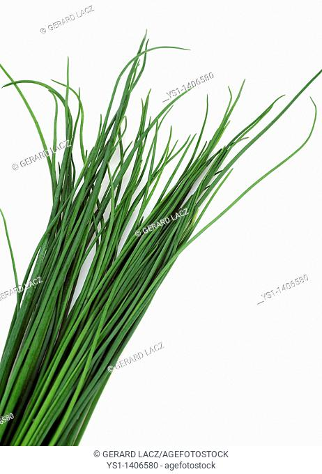 CHIVES allium schoenoprasum AGAINST WHITE BACKGROUND