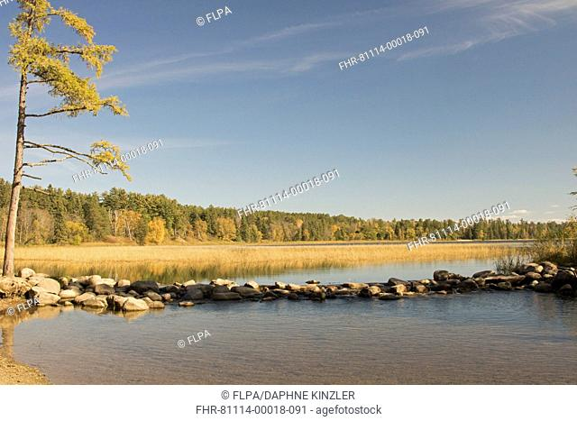 View of lake forming headwaters of Mississippi River, Itasca State Park, Minnesota, U.S.A., October