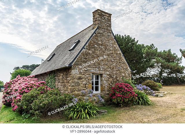 House with hortensiae. Bréhat island, Côtes-d'Armor, Brittany, France