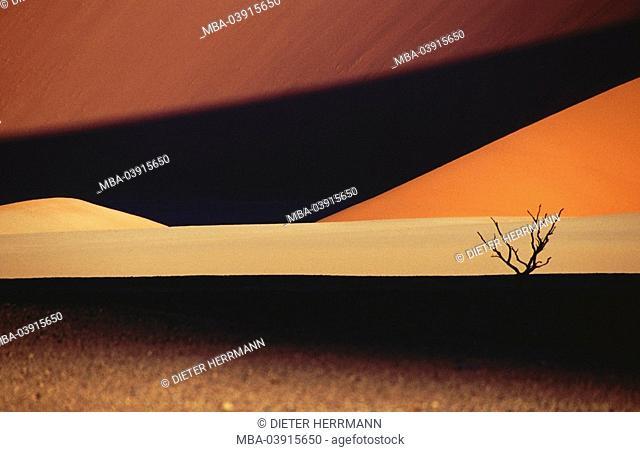 Perished desert-landscape, tree, acacia, camel-thorn, Acacia erioloba Africa Namibia desert Naukluft national-park, nature, landscape, desert, sand, sand-dune