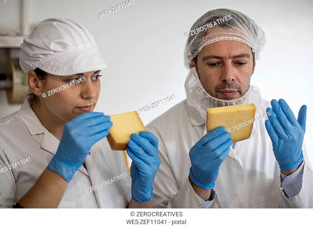 Cheese factory workers testing quality of cheese