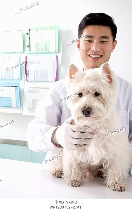 Veterinarian with dog in office