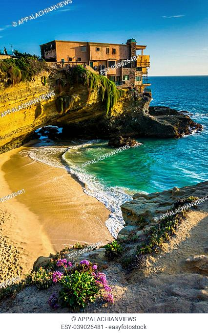 Flowers and view of a house on a cliff and a small cove at Table Rock Beach, in Laguna Beach, California