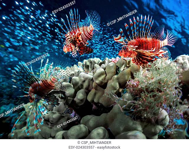 Fish with coral reef