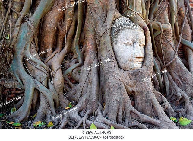 Thailand, Ayutthaya, stony head of Buddha from the damaged monument, raised by tree roots