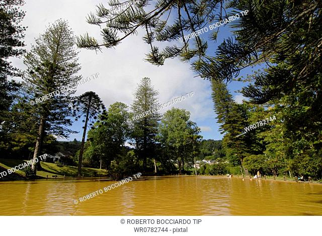Portugal, Azores, Sao Miguel island, Furnas, Terra Nostra Park, thermal pool surronded by monkey puzzle trees Araucaria araucana