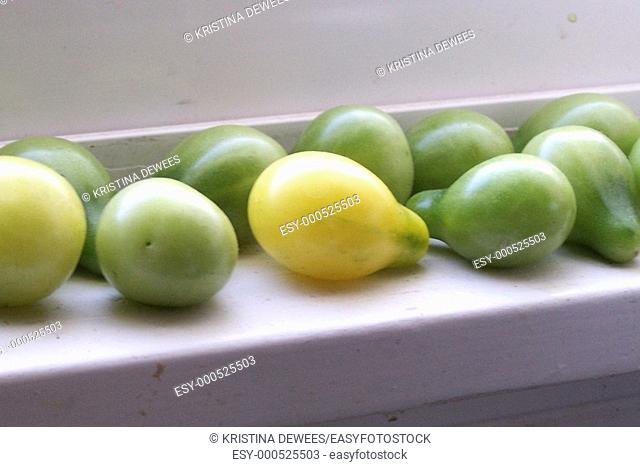 Some yellow pear tomatoes ripening in the sun on a white windowledge
