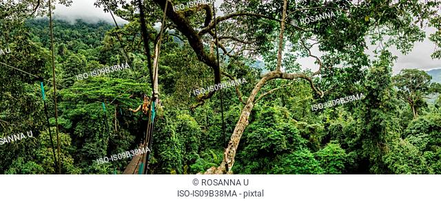 Treetop trekking, Ban Nongluang National Park, Champassak province, Paksong, Laos