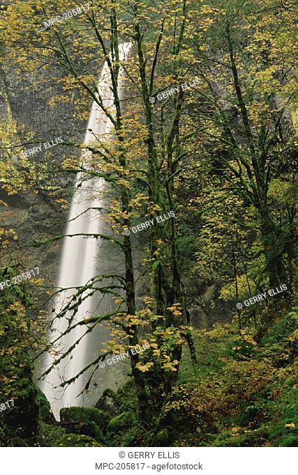 ELOWAH FALLS IN TEMPERATE RAINFOREST, FALL SEASON, COLUMBIA GORGE NATIONAL SCENIC AREA, OREGON