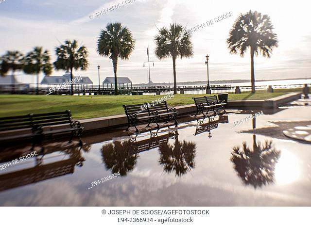 Benches and trees in Water Front Park in Charleston South Carolina with a puddle in the foreground