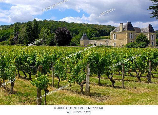 Vineyards near Chinon, Indre-et-Loire, Loire Valley, France