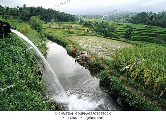irrigation in paddy fields, Lombok island, Lesser Sunda Islands, Republic of Indonesia, Southeast Asia and Oceania