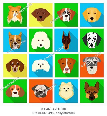 Doberman, Dalmatian, Dachshund, Spitz, Stafford and other breeds of dogs.Muzzle of the breed of dogs set collection icons in flat style bitmap