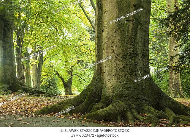 Autumn in Victoria Park, Bath, Somerset, England