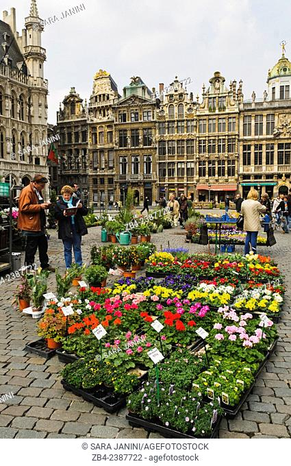 Flower market and Guildhalls on the Grand Place or Grote Markt, UNESCO World Heritage Site, Brussels, Belgium, Europe