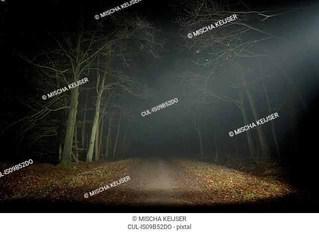 Forest at night, Breda, North Brabant, Netherlands