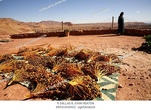 Africa, North Africa, Morocco, Tinerhir, Atlas Mountains, Dates Drying in Backyard