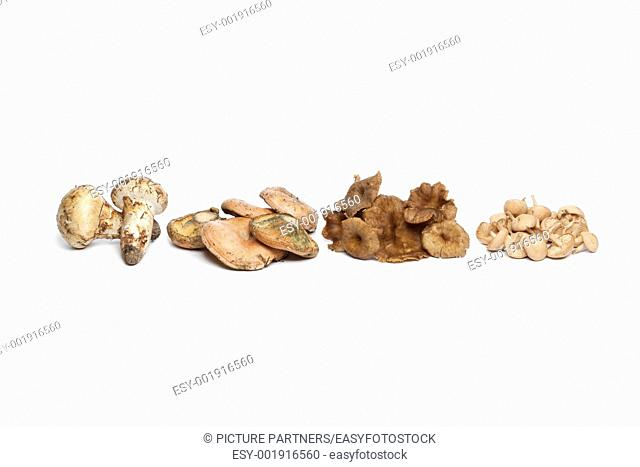 Different autumn mushrooms on white background