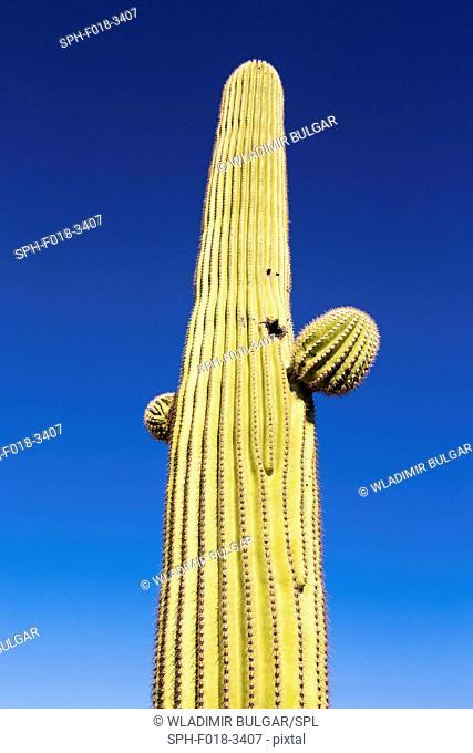 Cactus against a clear blue sky