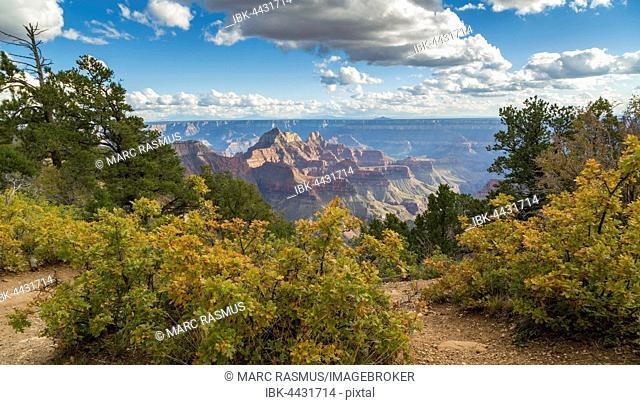 View of Grand Canyon, North Rim, Grand Canyon National Park, Arizona, USA