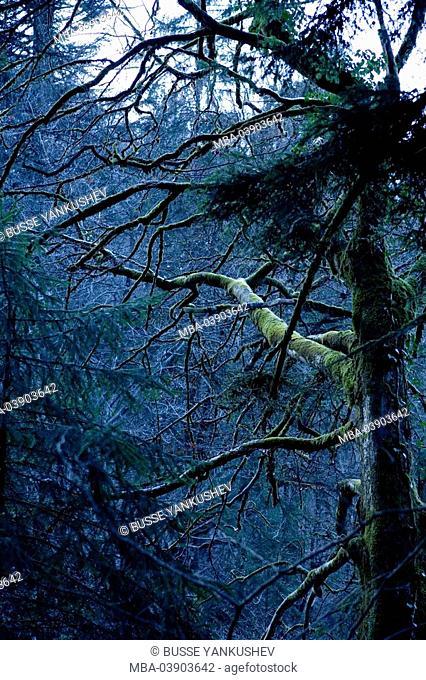 Tree, perished, Vorarlberg, Dornbirn, centime-hole-canyon, Austria