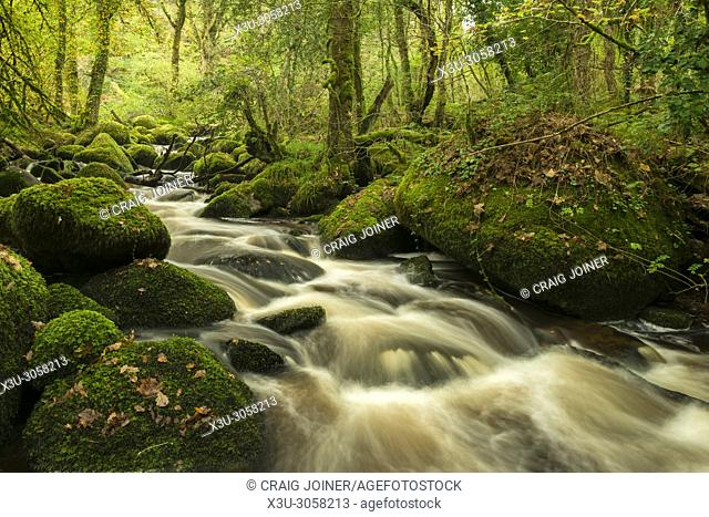 River Bovey in Houndtor Wood during Autumn in Dartmoor National park, Devon, England