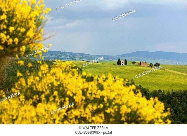 Gorse, Val d'Orcia, Siena, Tuscany, Italy