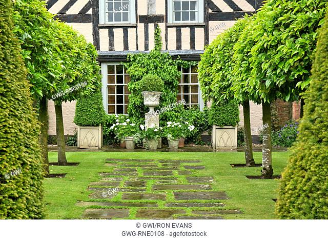 THE OLD GARDEN TWO ROWS OF CLIPPED PORTUGUESE LAURELS AT WOLLERTON OLD HALL