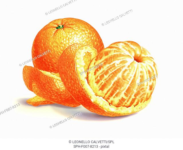 Oranges, computer artwork