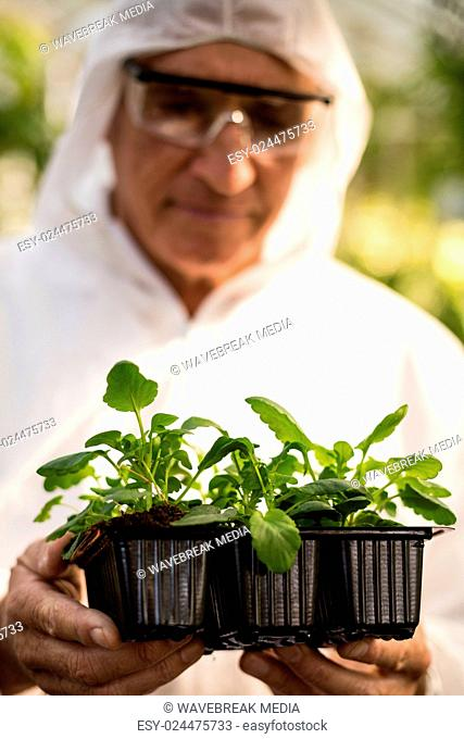 Male scientist in clean suit examining plants
