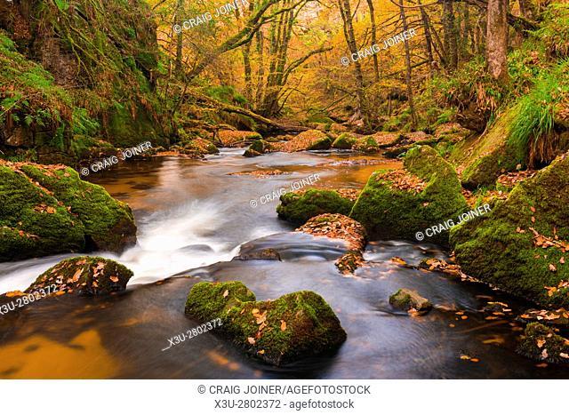 Golitha Falls on the River Fowey in Draynes Wood on Bodmin Moor, Cornwall, England
