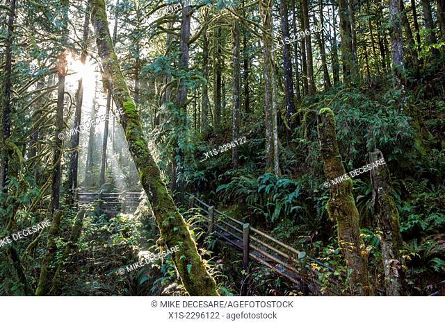 Sunlight streams through a forest