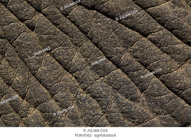 Abstract of elephant's skin
