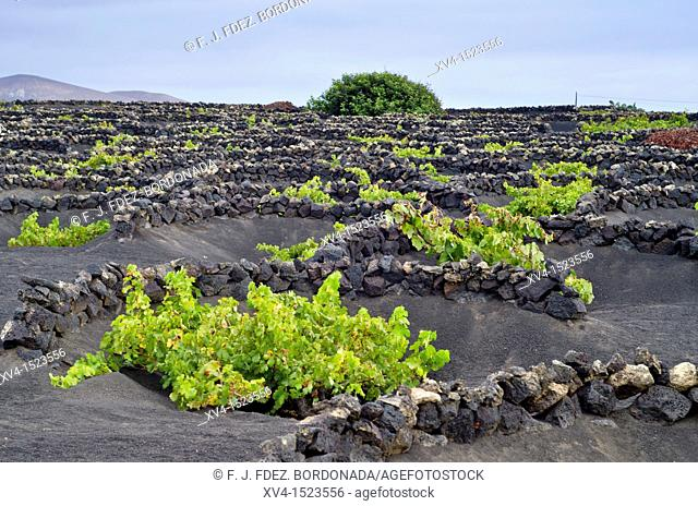 La Geria landscape  Lanzarote, Canary Islands, Spain