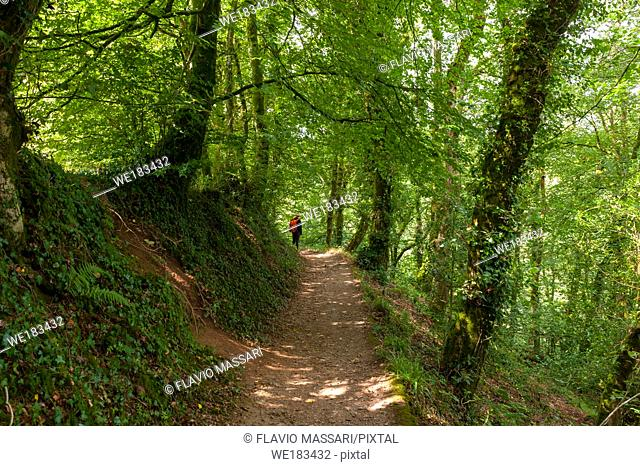 Path in the Lydford Gorge Natural Reserve, Devon, UK