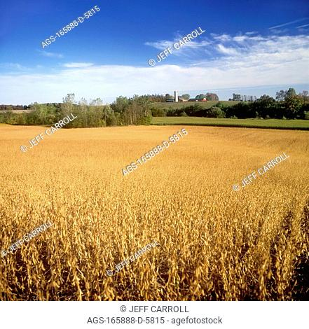 Agriculture - Field of mature soybeans, ready for harvest, with a farmstead in the distance / Canada - Ontario