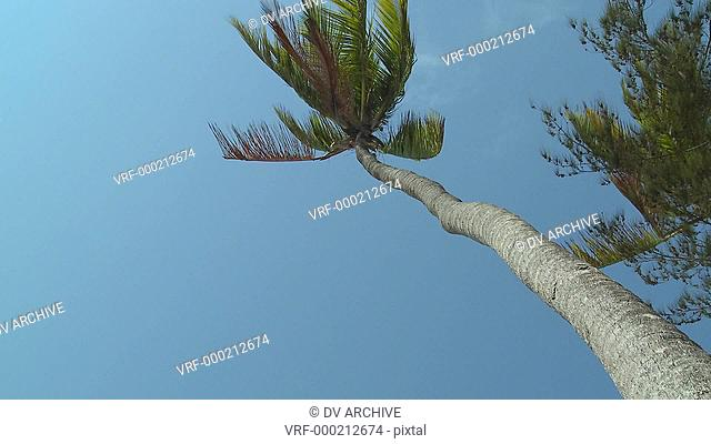 A low angle view looking straight up at a palm tree blowing in the wind