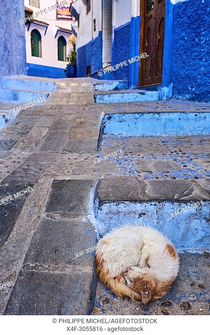 Morocco, Rif area, Chefchaouen (Chaouen) town, the blue city, street cat